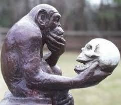 scimmia-con-teschio